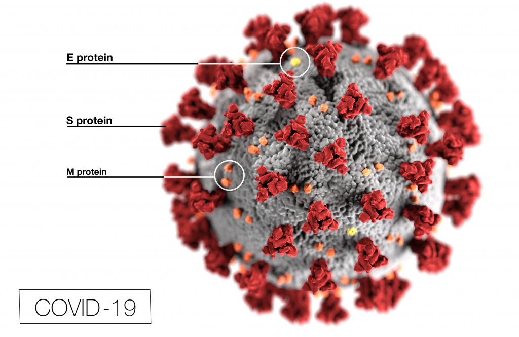 Text Box: Figure 1. This illustration, created at the Centers for Disease Control and Prevention (CDC), reveals ultrastructural morphology exhibited by coronaviruses.