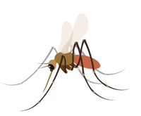 Proposed mosquito emohi