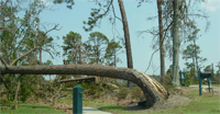 Downed trees line route to Mississippi shelter