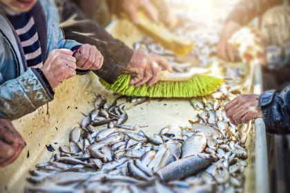 Farmed Fish Tradeoff: Plant-Based Feeds May Diminish Health Benefits