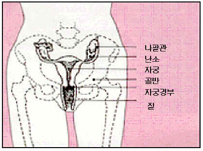 anatomy of an ovarian